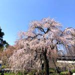 "<span class=""title"">桜(^^)!</span>"